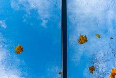 在一屋顶windown的叶子在秋天 库存图片