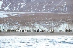 在一座冰山附近的企鹅国王在南乔治亚 免版税图库摄影