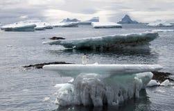 在一座冰川的Adelie企鹅在南极洲 库存照片
