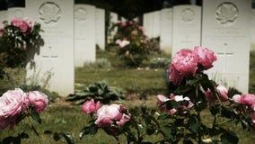 在一座加拿大纪念公墓的桃红色玫瑰 股票录像