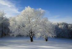 在一座多雪的山的冬天风景 免版税库存图片