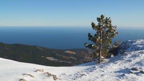 在一座多雪的山顶部的杉树 影视素材