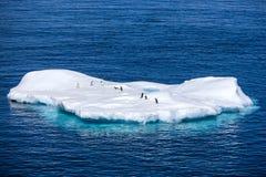 在一座小冰山的企鹅在南极洲 免版税图库摄影