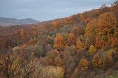 在一座山一边的树在秋天期间 库存图片