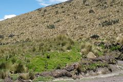 在一座山一边的路在安蒂萨纳火山生态储备,厄瓜多尔 库存照片