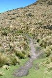 在一座山一边的道路在安蒂萨纳火山生态储备,厄瓜多尔 免版税库存照片