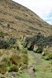 在一座山一边的道路在安蒂萨纳火山生态储备,厄瓜多尔 库存照片