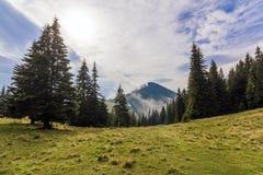 在一座山的上面的云彩与绿色杉木森林和草m的 免版税库存图片