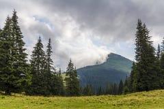 在一座山的上面的云彩与绿色杉木森林和草m的 库存图片