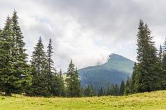 在一座山的上面的云彩与绿色杉木森林和草m的 库存照片