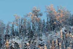 在一座山的上面的积雪的树在日落的点燃 冬天,俄罗斯,乌拉尔 免版税图库摄影