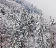 在一座山的倾斜的树在一有雾的天在冬天 免版税库存图片