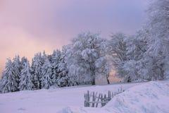 在一座山的冬天不可思议的场面在罗马尼亚 免版税库存图片