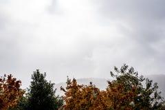 在一座山的有雾的天与树上面细节与秋天的 免版税库存照片