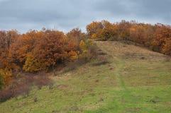 在一座山的树在秋天期间 免版税库存图片