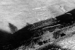 在一座山的树阴影与熔化的雪 库存照片