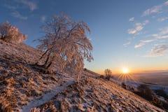 在一座山的美好的日落,当雪报道地面、霜在树分支和温暖的光反射 免版税库存图片
