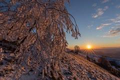 在一座山的美好的日落,当雪报道地面、霜在树分支和温暖的光反射 免版税图库摄影