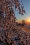 在一座山的美好的日落,当雪报道地面、霜在树分支和温暖的光反射 图库摄影