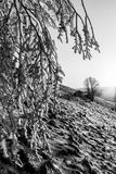 在一座山的美好的日落,当雪报道地面和霜在树分支  库存照片