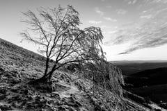在一座山的美好的日落,当雪报道地面和霜在树分支  免版税库存照片