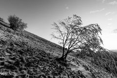在一座山的美好的日落,当雪报道地面和霜在树分支  库存图片