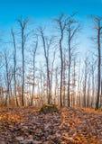 在一座山的美好的秋天与太阳光亮的低谷森林 免版税库存图片