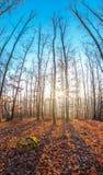 在一座山的美好的秋天与太阳光亮的低谷森林 图库摄影