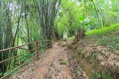 在一座山的走的足迹在泰国 免版税图库摄影