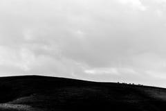 在一座山顶部的一些遥远的马,在巨大的天空机智下 免版税库存照片