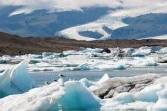 在一座浮动冰山,冰盐水湖Jokulsarlon,冰岛的海鸥 免版税库存图片