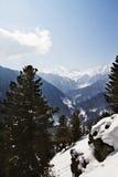 在一座积雪的山,克什米尔,查谟和克什米尔,印度的树 库存图片