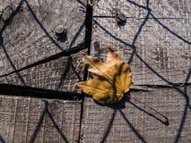 在一座老导线桥梁的板条下落的秋天叶子 库存图片
