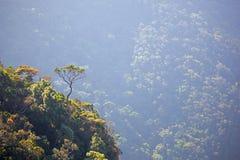 在一座陡峭的山边缘的大弯曲的树 免版税库存图片