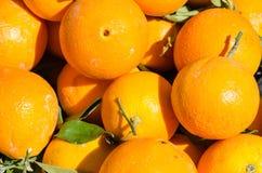 在一张书桌上的桔子在农厂市场上 库存图片