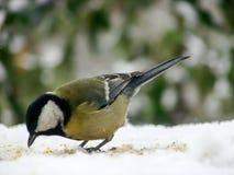 在一张多雪的桌上的北美山雀在冬天 库存图片