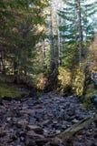 在一张岩石床的平静的射流在一个五颜六色的秋天森林里 免版税图库摄影
