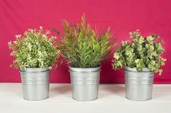 在一张木桌上的三棵植物 免版税库存照片
