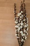 在一张木桌上的开花的分支 免版税库存照片