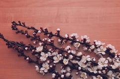 在一张木桌上的开花的分支 免版税库存图片