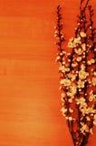 在一张木桌上的开花的分支 库存图片