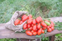 在一张木桌上的新鲜的长的蕃茄 免版税库存图片