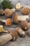 在一张木桌上的未加工的蘑菇 可食的牛肝菌蕈类和黄蘑菇 库存图片