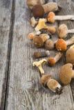 在一张木桌上的未加工的蘑菇 可食的牛肝菌蕈类和黄蘑菇 库存照片
