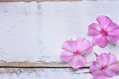 在一张木桌上的桃红色花 库存照片