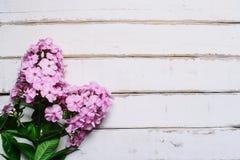 在一张木桌上的桃红色花 免版税图库摄影