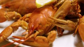 在一张木桌上的煮熟的红色小龙虾在乔治亚鱼餐馆  在一块白色板材的红色小龙虾 关闭 股票视频