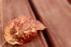 在一张木桌上的秋叶 库存照片