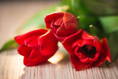 在一张木桌上的红色郁金香 免版税图库摄影