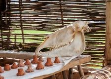 在一张木桌上的马头骨与对此的一些陶瓷图 免版税库存照片